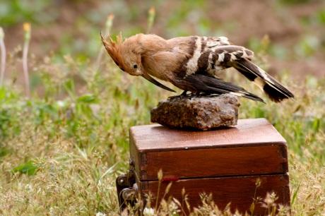 9_WoodpeckerBox